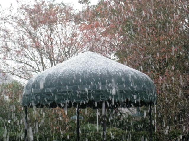 Snowinginnola
